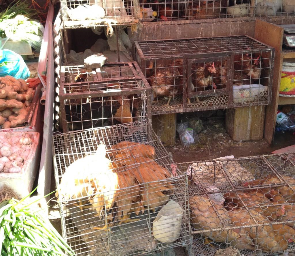 Kippen op markt