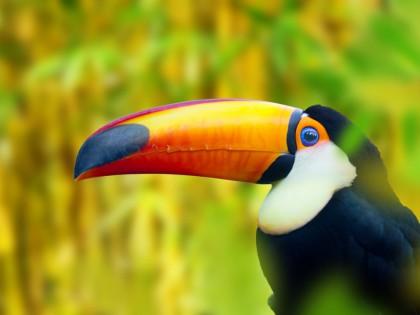 Natuur Panama