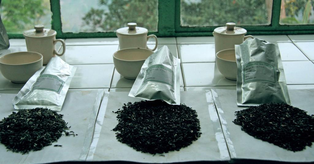 Teas ready for tasting