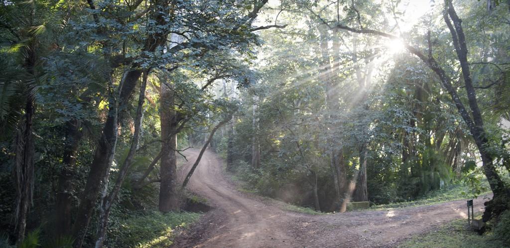 trees&light2