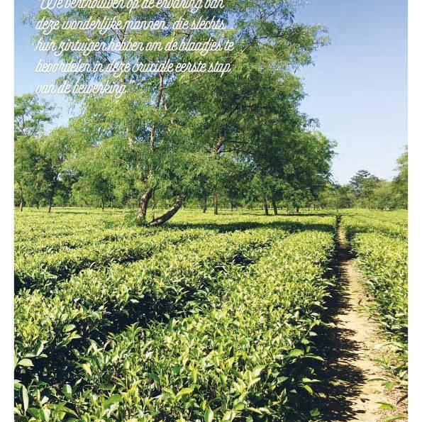 Reisverslag-Assam-1